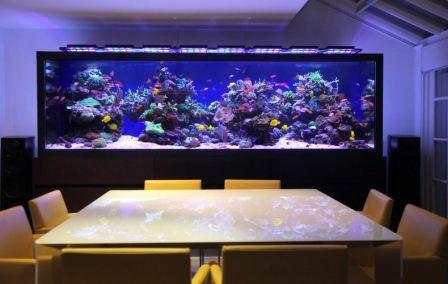 Выбор аквариума для квартиры, размещение, оформление
